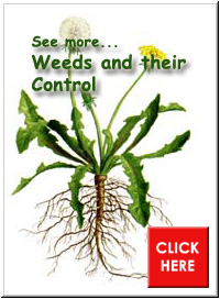 Weeds and their Control Pointer