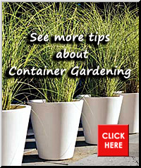 Container Gardening Pointer