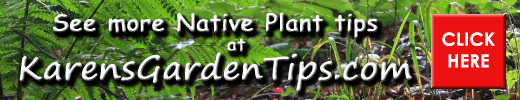 Native Plant Pointer