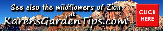 Zion wildflowers pointer