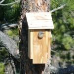 Bluebird Nesting House