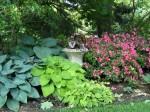 Shade garden with hostas and azaleas
