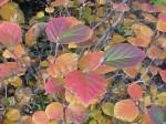 Fothergill Fall foliage