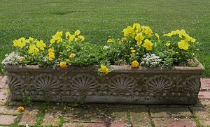 concrete-planter-pansies