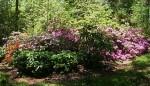 Garden of Wyatt LeFever