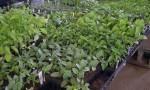 fm-veg-plants