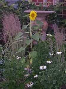 sunflower-coneflowers-grass