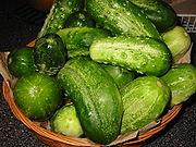 Cucumbers pickling