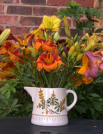 a daylilies in 1 vase