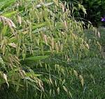 a oats