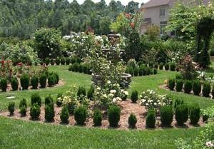 a rose garden 2