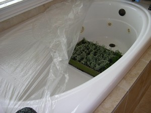 santolina flat in tub