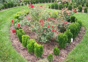 Red Parterre
