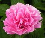 Carnation_Bouquet_sm