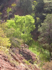 Watchman foliage