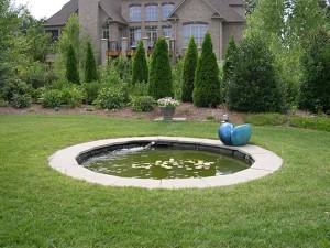 a iris garden before