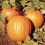 PumpkinHowden