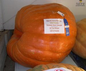 pumpkin winnerDSCN4371