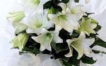 Lilies white