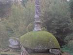 b tortoise 2