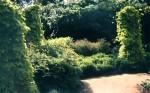 herb garden hops