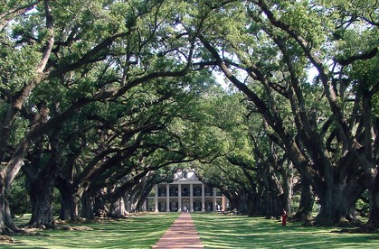 Oal Live Oak Alley Plantation 3