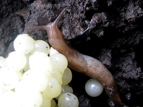 Adult and eggs