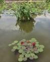 Water-garden Biltmore