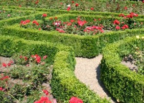 Bamberg rose garden beds