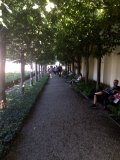 Bamberg rose garden lime trees