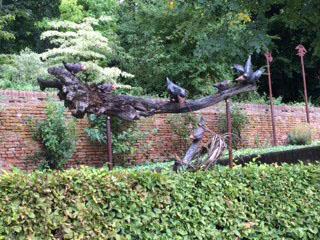 Melk birds on fallen tree