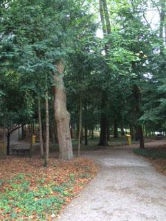 Melk paths in woods