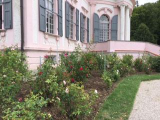 Melk rose garden
