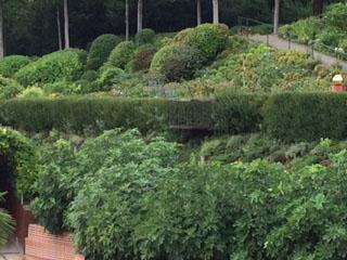 Melk terrace veg