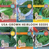 lettuce seed heirloom