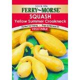 squash seed pk