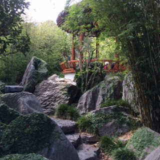 Black bamboo nr Rd Pavilion_IMG_4592