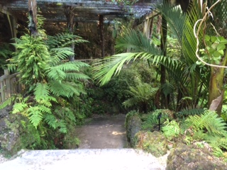 Fernery path_IMG_4376