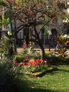 Flowering tree red _IMG_5741