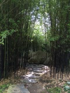 Rx n black bamboo_IMG_4606