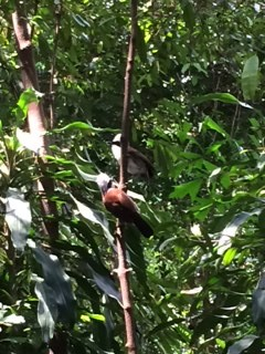 birds in rainforest_IMG_2324