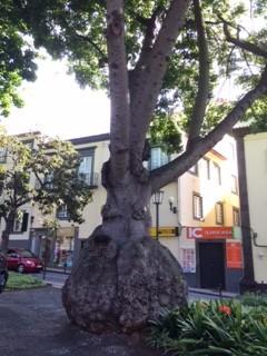 elephant like tree_IMG_5749