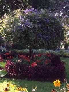 flowering tree with red plants below_IMG_5768