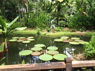 lily pond IMG_2373