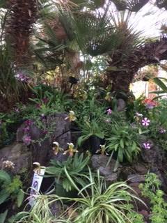 orchids en mass_IMG_4352