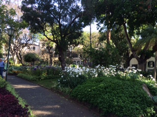 path c daisies IMG_5746