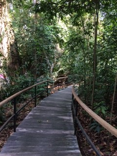 rainforest pathIMG_2311