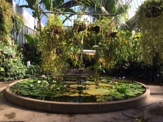 water lily pool IMG_4399