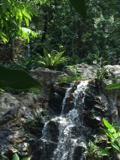waterfall with plants_IMG_2378
