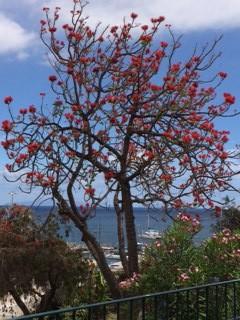 z erythrina tree_IMG_5858